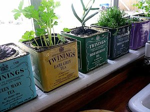 Brilliant-Ideas-to-Create-Indoor-Herb-Garden-Ideas-by-Using-Old-and-Unused-Tin-as-Pot