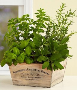 DIY-indoor-herb-garden-