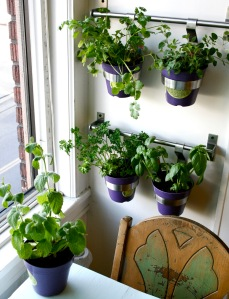 indoor-herb-garden-ideas-wall